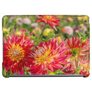 USA, Washington. Dahlia Flowers In Garden iPad Air Case