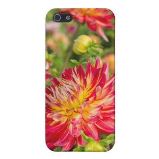 USA, Washington. Dahlia Flowers In Garden iPhone 5 Covers