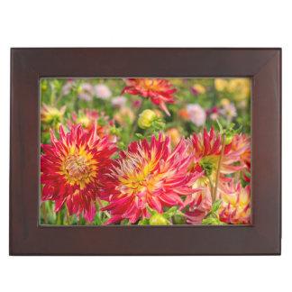 USA, Washington. Dahlia Flowers In Garden Memory Box