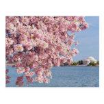 USA, Washington DC, Cherry tree