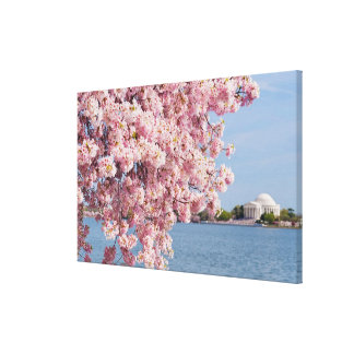 USA, Washington DC, Cherry tree Canvas Print