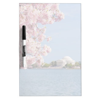 USA, Washington DC, Cherry tree Dry Erase Board