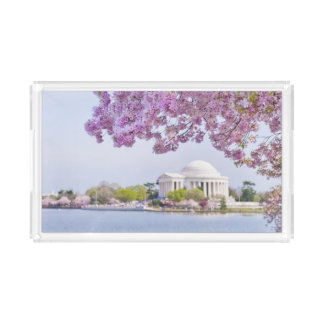 USA, Washington DC, Cherry tree in bloom Acrylic Tray