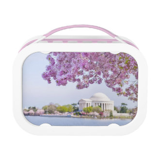 USA, Washington DC, Cherry tree in bloom Lunch Box