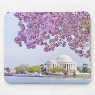 USA, Washington DC, Cherry tree in bloom Mouse Pad