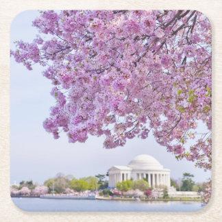 USA, Washington DC, Cherry tree in bloom Square Paper Coaster