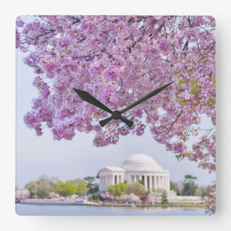 USA, Washington DC, Cherry tree in bloom Square Wall Clock