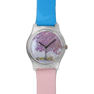 USA, Washington DC, Cherry tree in bloom Watch