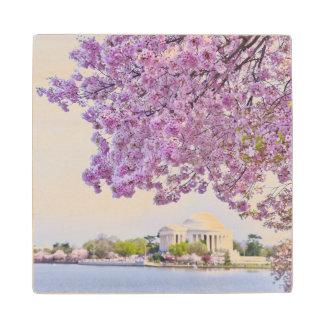 USA, Washington DC, Cherry tree in bloom Wood Coaster