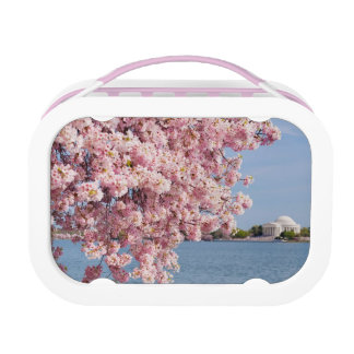 USA, Washington DC, Cherry tree Lunch Box
