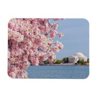 USA, Washington DC, Cherry tree Magnet