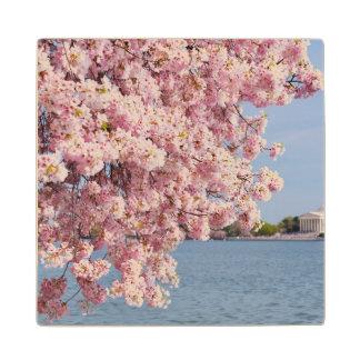 USA, Washington DC, Cherry tree Maple Wood Coaster
