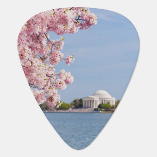 USA, Washington DC, Cherry tree Plectrum