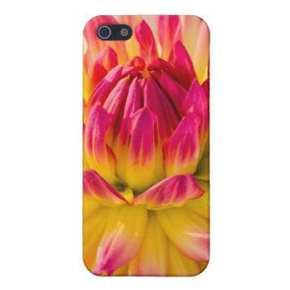 USA, Washington. Detail Of Dahlia Flower iPhone 5/5S Case