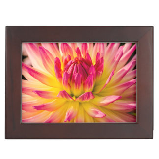 USA, Washington. Detail Of Dahlia Flower Keepsake Box