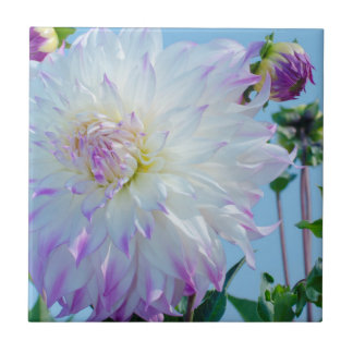 USA, Washington. Detail Of Dahlia Flowers Tile