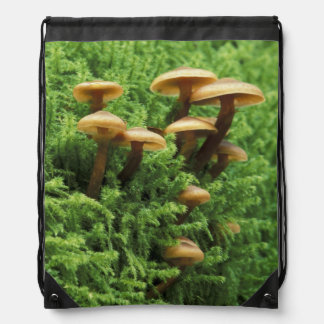 USA, Washington. Ferns and mushrooms Drawstring Bag