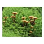 USA, Washington. Ferns and mushrooms Postcard