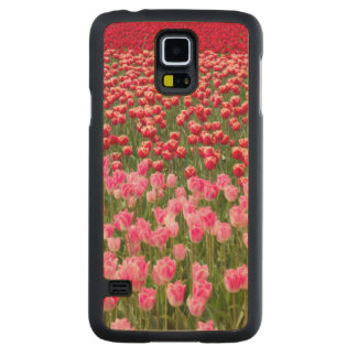 USA, Washington. Field Of Multicolored Tulips Carved Maple Galaxy S5 Case