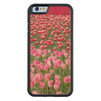 USA, Washington. Field Of Multicolored Tulips Carved Maple iPhone 6 Bumper Case