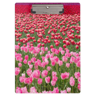 USA, Washington. Field Of Multicolored Tulips Clipboard