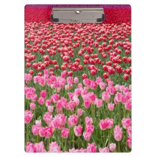 USA, Washington. Field Of Multicolored Tulips Clipboards