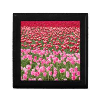 USA, Washington. Field Of Multicolored Tulips Gift Box
