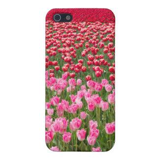 USA, Washington. Field Of Multicolored Tulips iPhone 5/5S Case