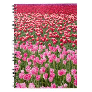 USA, Washington. Field Of Multicolored Tulips Notebooks