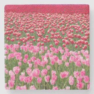 USA, Washington. Field Of Multicolored Tulips Stone Coaster
