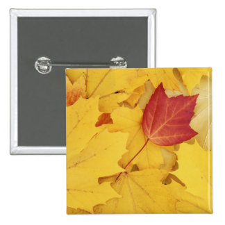 USA, Washington, Finch Arboretum, Red and 15 Cm Square Badge