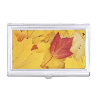 USA, Washington, Finch Arboretum, Red and Business Card Holder