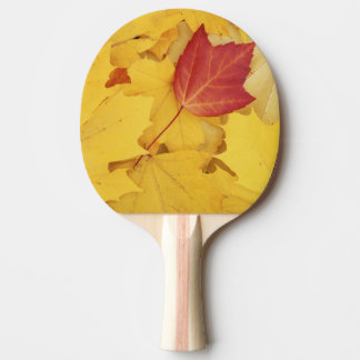 USA, Washington, Finch Arboretum, Red and Ping Pong Paddle