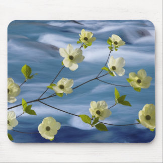USA, Washington, Hood Canal. Pacific dogwood Mouse Mat