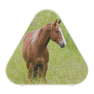 USA, Washington, Horse in Spring Field,