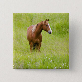 USA, Washington, Horse in Spring Field, 15 Cm Square Badge