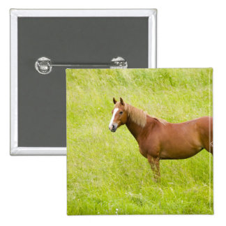 USA, Washington, Horse in Spring Field, 2 15 Cm Square Badge
