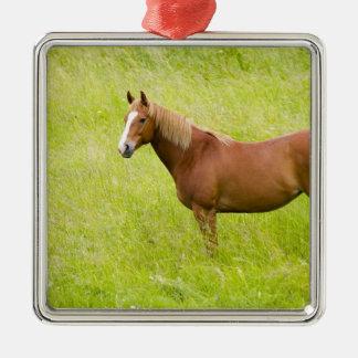 USA, Washington, Horse in Spring Field, 2 Christmas Ornament
