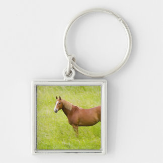 USA, Washington, Horse in Spring Field, 2 Key Ring