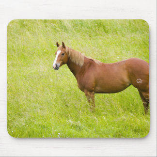 USA, Washington, Horse in Spring Field, 2 Mouse Mat
