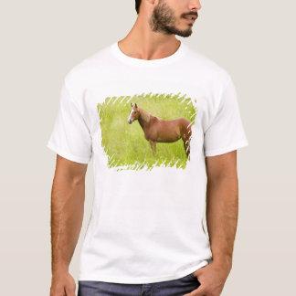 USA, Washington, Horse in Spring Field, 2 T-Shirt