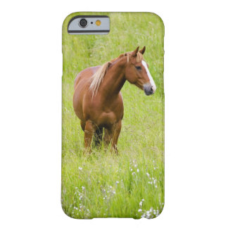 USA, Washington, Horse in Spring Field, Barely There iPhone 6 Case