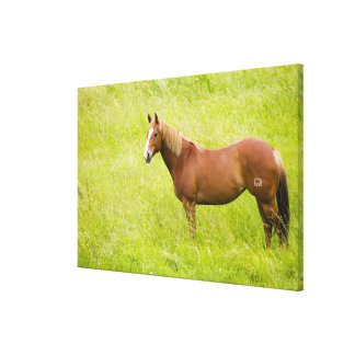 USA, Washington, Horse in Spring Field, Canvas Print