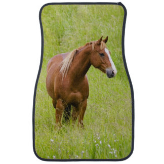 USA, Washington, Horse in Spring Field, Car Mat