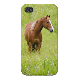 USA, Washington, Horse in Spring Field, Case For iPhone 4