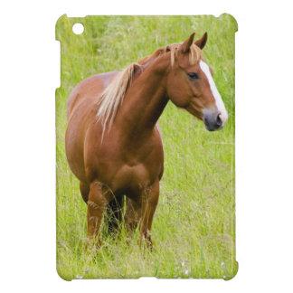 USA, Washington, Horse in Spring Field, Case For The iPad Mini