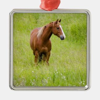 USA, Washington, Horse in Spring Field, Christmas Ornament