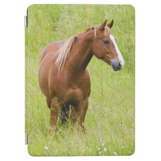 USA, Washington, Horse in Spring Field, iPad Air Cover
