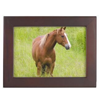 USA, Washington, Horse in Spring Field, Keepsake Box