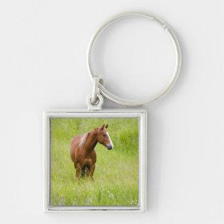 USA, Washington, Horse in Spring Field, Key Ring